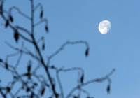 Gibbous moon in willows