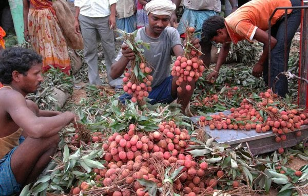Municipality raided, banned Litchi sale in Kalimpong, Mirik