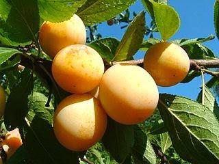 Comer na Alemanha: frutas