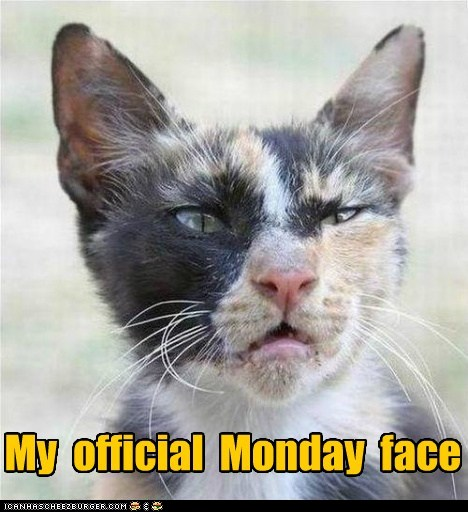 funny photos of happy monday