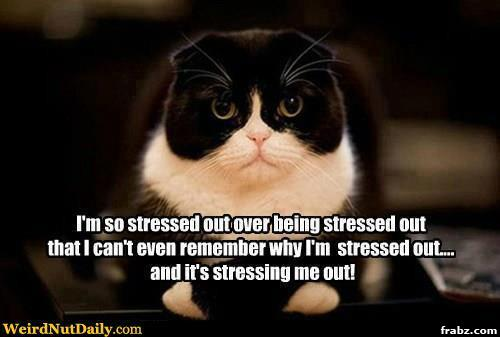 Funny Meme About Stress : The pa journey a canadian perspective stress