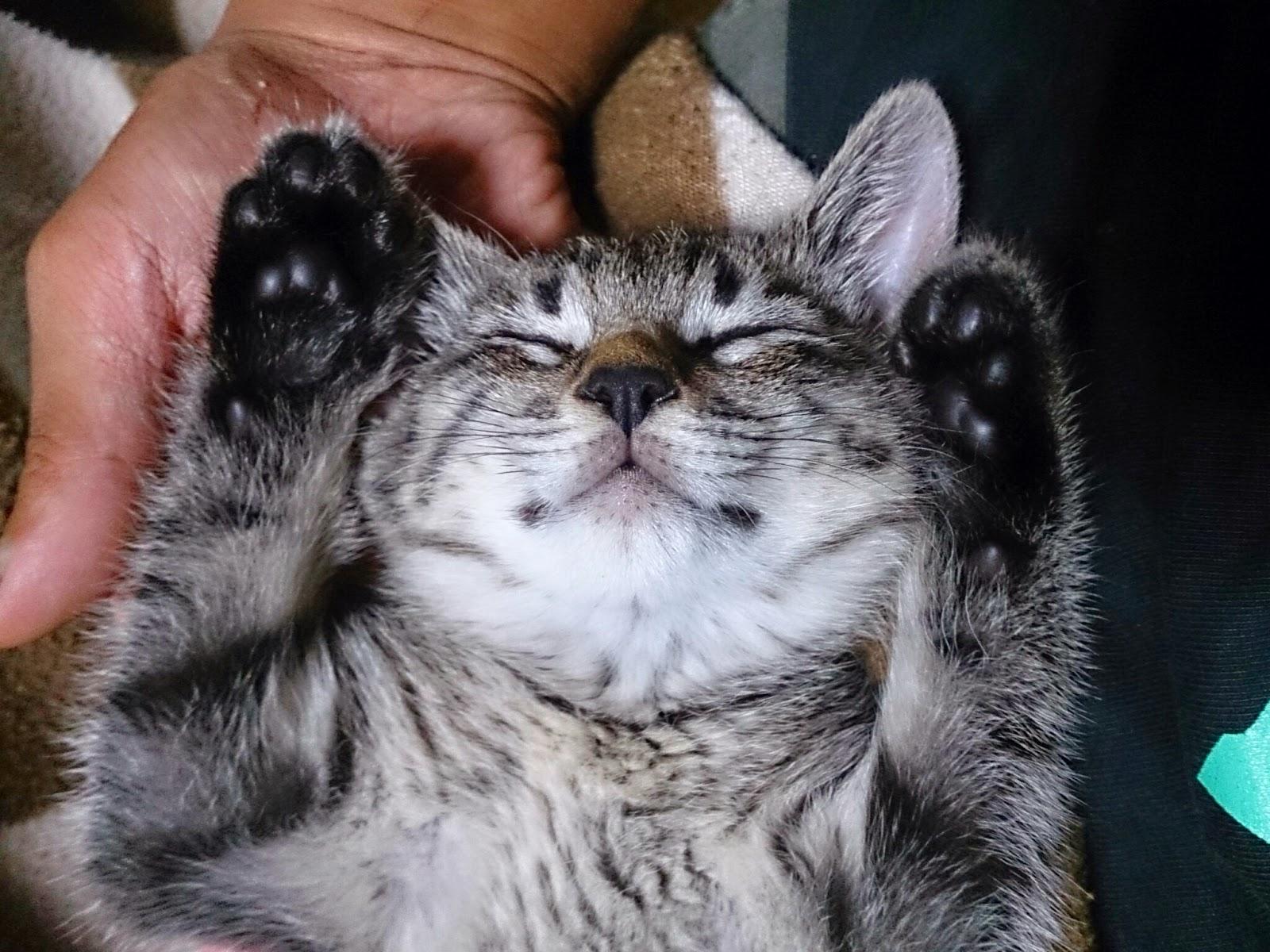 子猫の寝顔 - The sleeping face of the baby cat