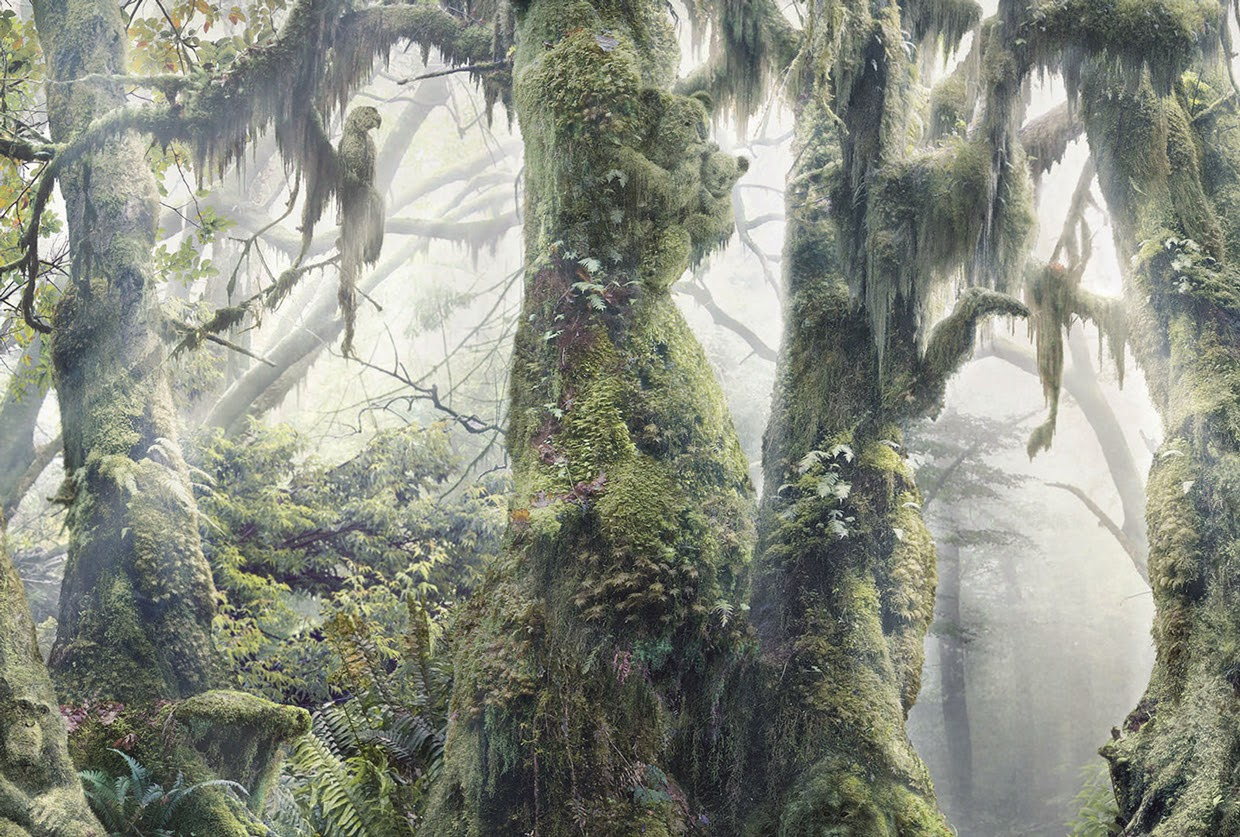 04-Anaïs-Boileau-WWF-Marcel-Hidden-Animals-in-the-Rainforest-www-designstack-co