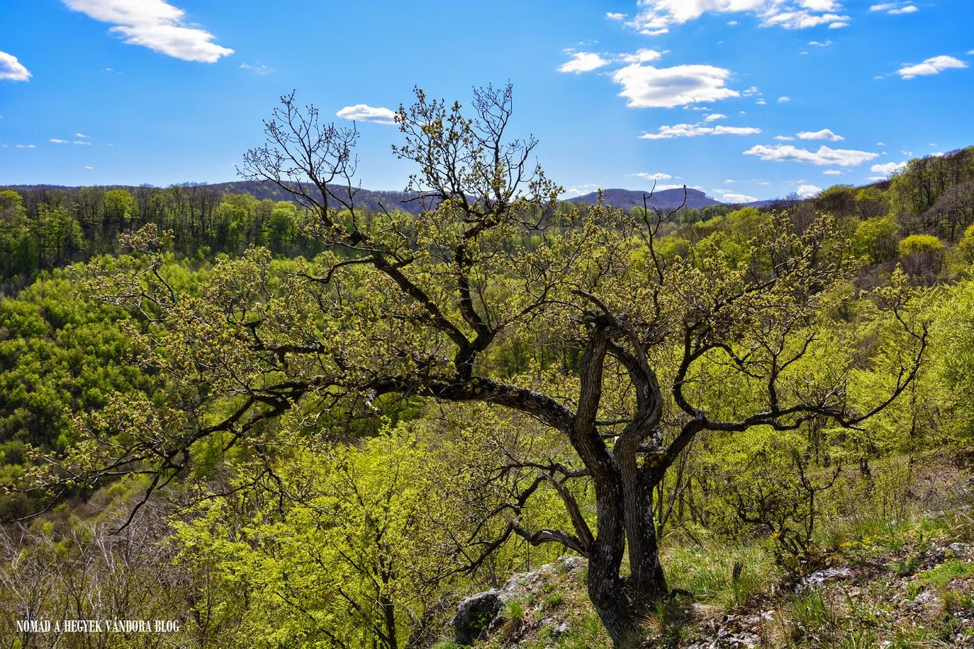 Nomád a hegyek vándora - természetjáró és túrafotós blog
