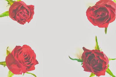 fondo rosas
