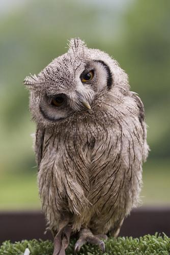 Zašto žene odgađaju majčinstvo - Page 3 Thoughtful+owl