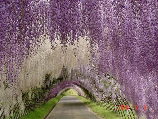 http://3.bp.blogspot.com/-wwl_dykOlKc/ULnirsVtyyI/AAAAAAAA6bg/F3nFFxQ18W8/s1600/Top-10-Tree-Tunnel-010.jpg