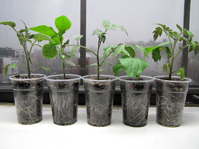 Bucolic Bushwick 2011 Seedlings