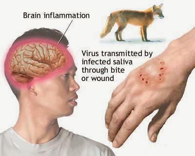 Easy Spreading 10 Most Dangerous Virus 2014 Updates