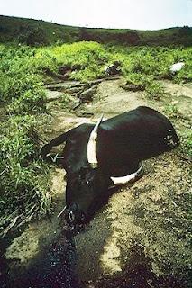 Energie et développement - catastrophe du lac Nyos et risque du stockage géologique de carbone