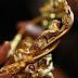 Artifak Emas Abad Ketiga Sebelum Masihi Ditemui