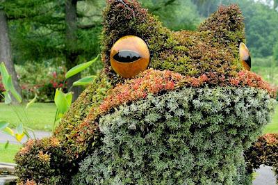 Obras de arte en arbustos sapo