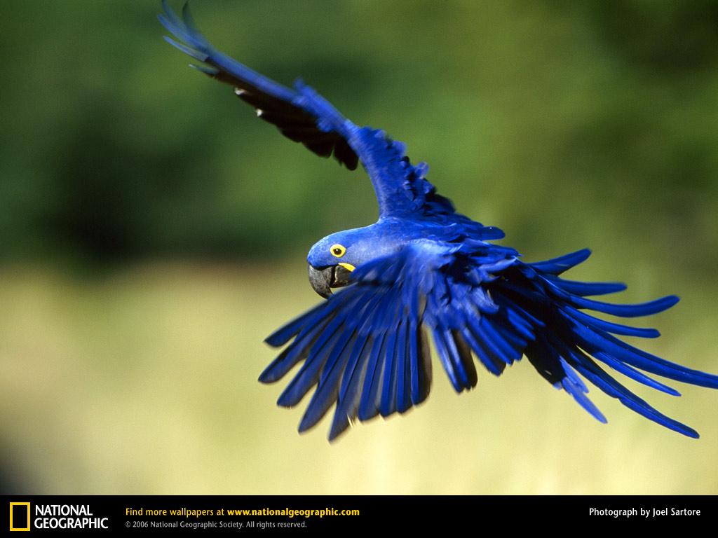 AnimalsintheTropicalRainforest BRILLIANT BIRDS