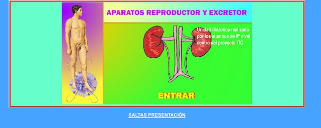 http://www.ceiploreto.es/sugerencias/averroes/manuelperez/udidacticas/udanatomia/reproductor/index.htm