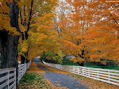 #9 Autumn Wallpaper