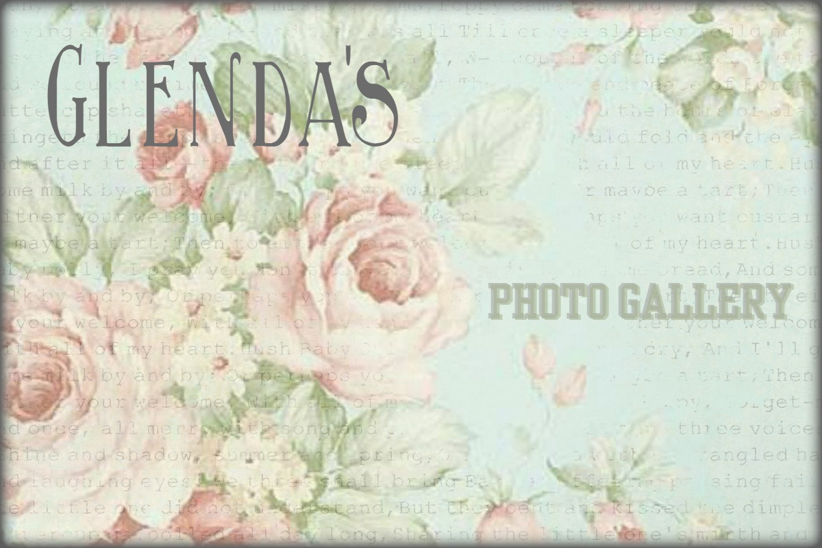 Glenda's Photo Gallery