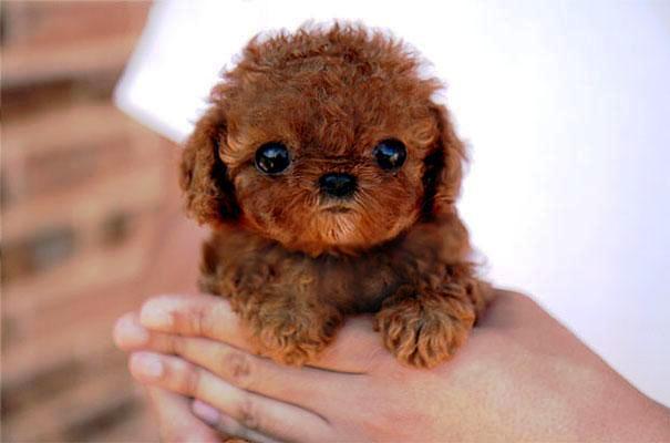 Cachorro Bebé