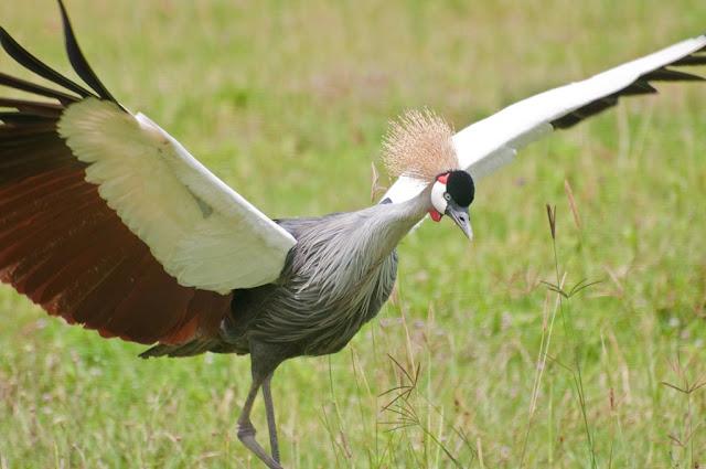 RA Safaris