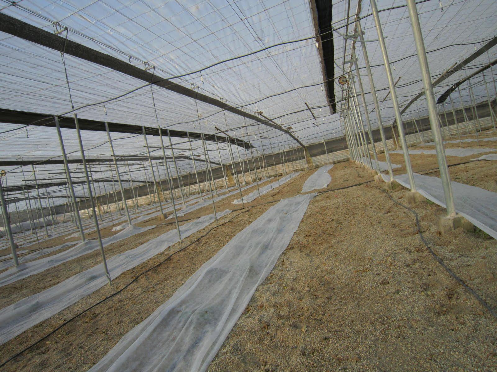Homo agricola de pl sticos y mantas - Techos de plastico ...
