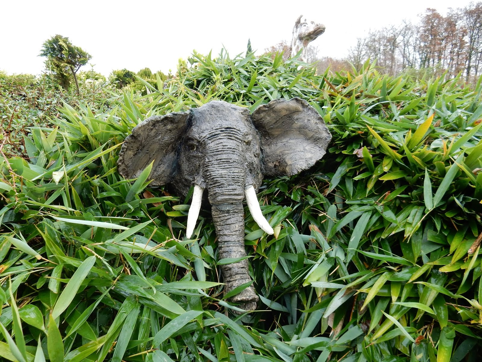 tête d'éléphant*