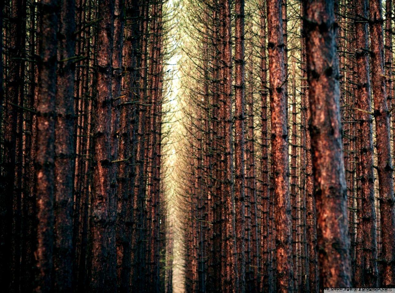 Dark Forest Autumn HD desktop wallpaper  Widescreen  High