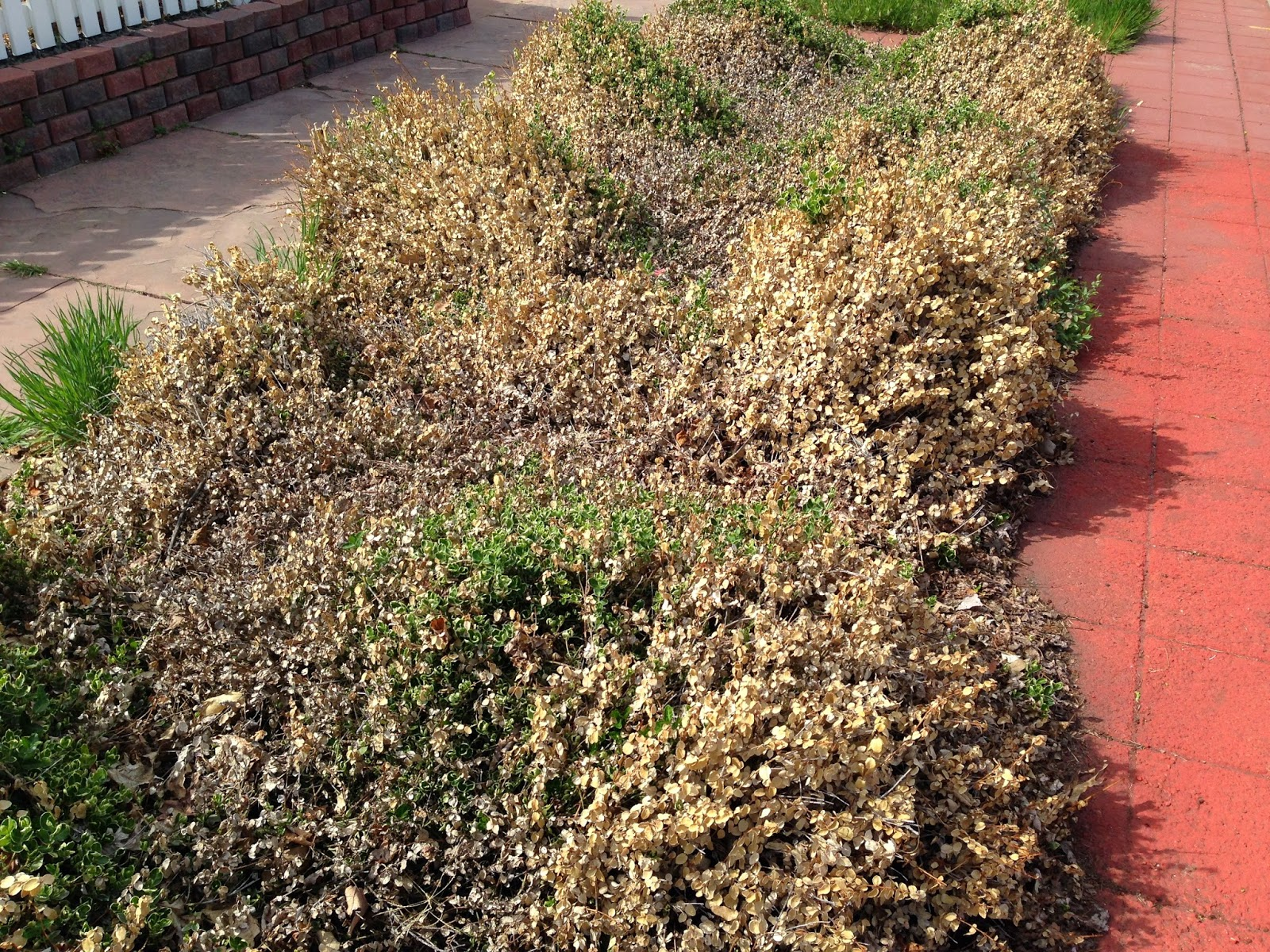Colorado Garden Punch List : April 2015