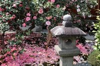 "Jizoin ""Tsubaki-dera"" Temple"