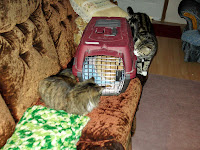 cat keeping cat in cage company