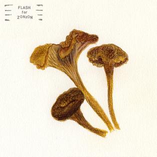 suppilovahvero, craterellus, mushroom