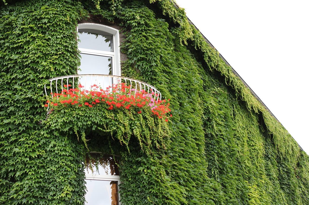 10 plantas para un jard n con sombra amigos de la jardiner a for Alberelli da terrazzo