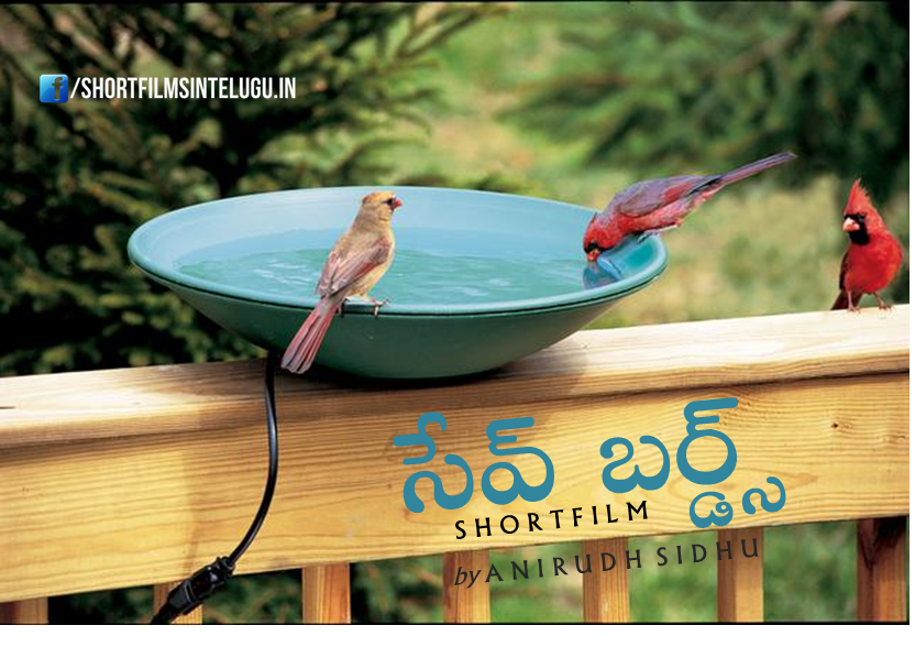 SAVE BIRDS  A Short Film By Anirudh Sidhu