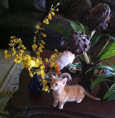 Orchids and kittens - Stein Your Florist Co.