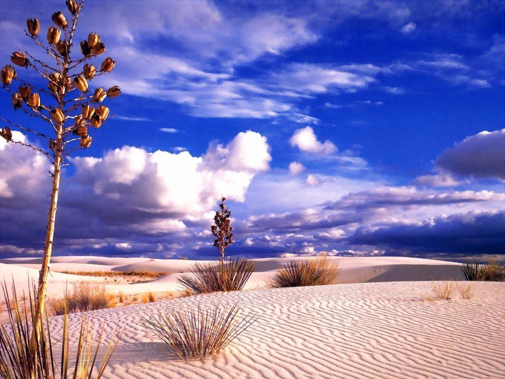 Cuma aralık 30 2011 çöl fotoğrafları çöl manzaraları yorum yap