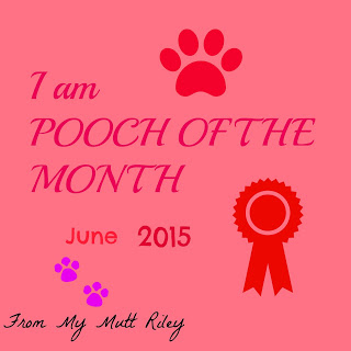 Pooch Of The Month Award