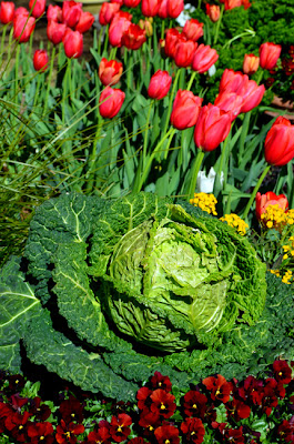Atlanta Blooms!, Atlanta Botanical Garden