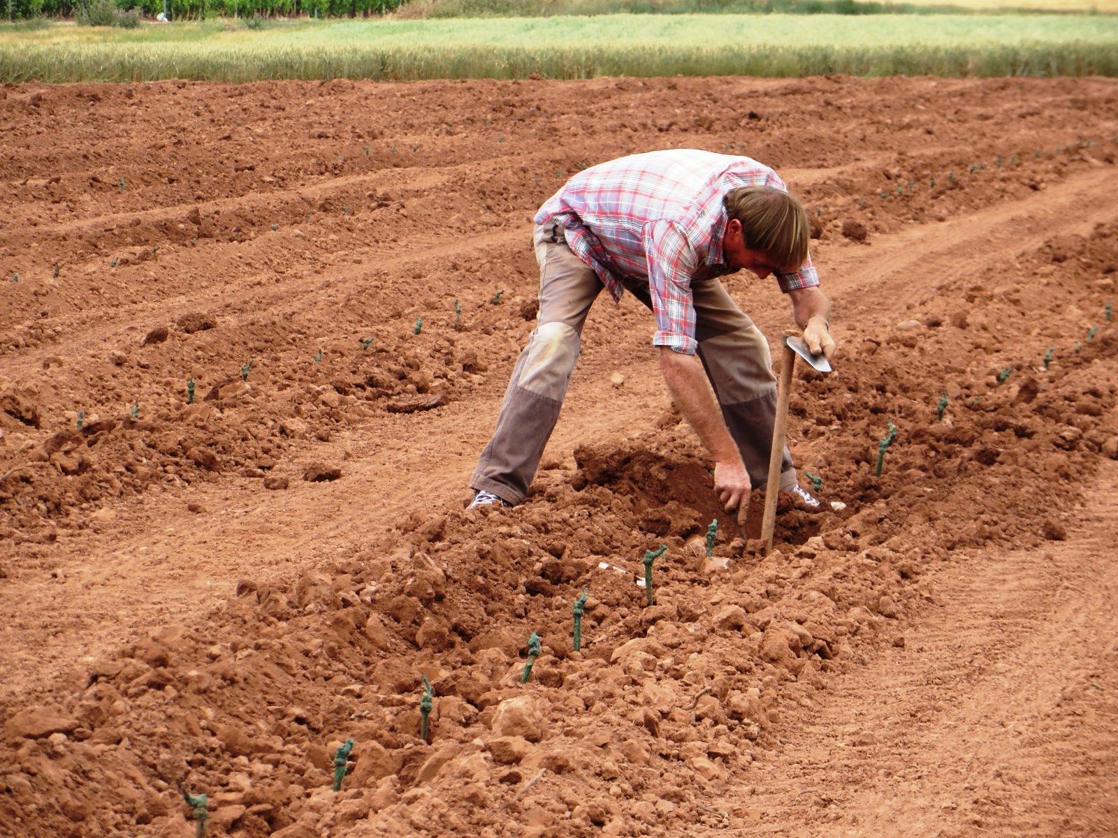 Urbina vinos blog preparaci n del suelo y plantaci n del for Tipos de terreno
