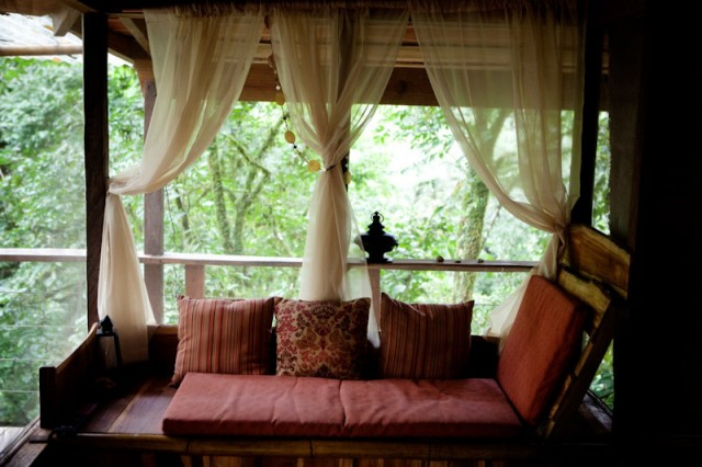 arbol casa selva