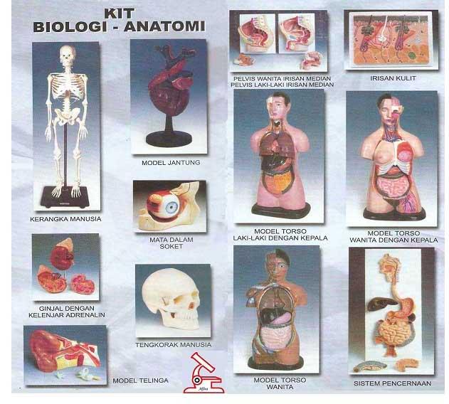 Struktur Pembentukan Tubuh Manusia