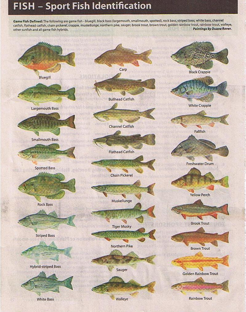 Freshwater fish species chart for Types of freshwater fish