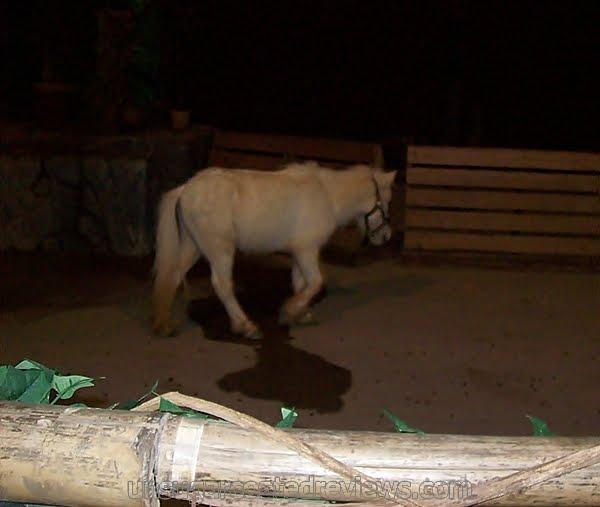 miniature horse in animal parade at Zoobic Safari
