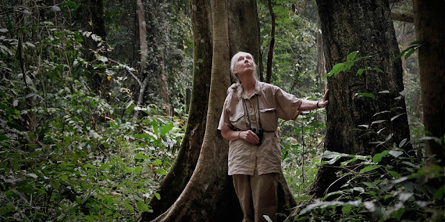 http://www.janegoodall.org/who-we-are/about-jane/reason-for-hope/#the-determination-of-young-people
