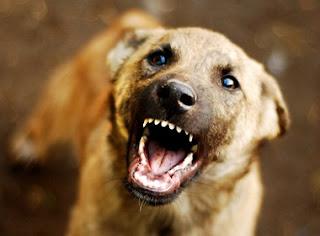 TIl cane cattivo nella mangiatoia dei cavalli (Fedro)