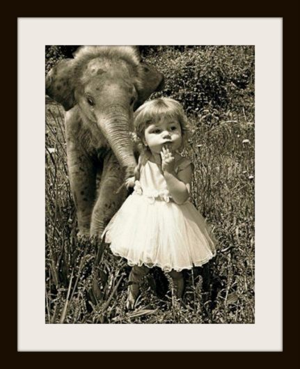 Baby Elephant + Little Girl