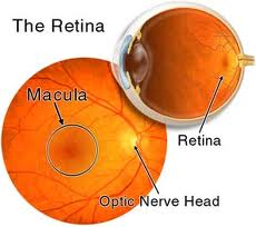 how to help someone with macular degeneration