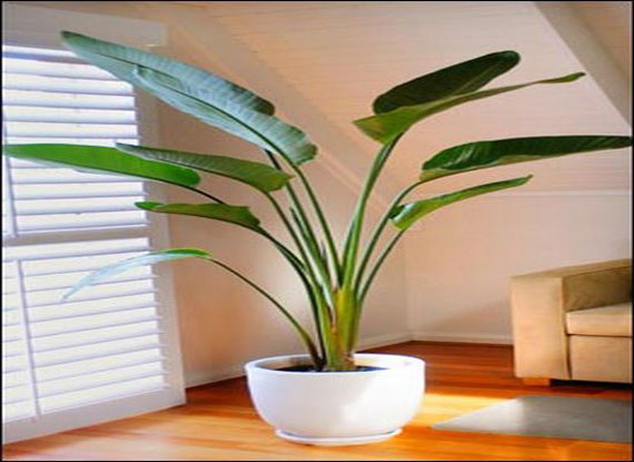 House Of Furniture Decor Your Home With Natural Indoor Plants