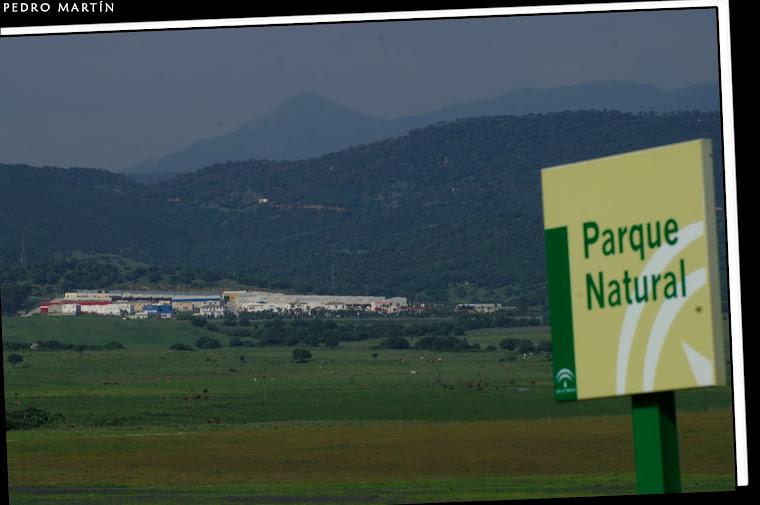 POLIGONO INDUSTRIAL LA PALMOSA - PARQUE NATURAL