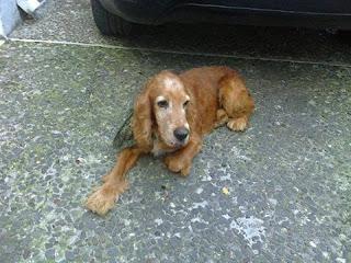 Βρέθηκε το σκυλάκι της φωτογραφίας στη Νεά Ερυθραία. Το αναγνωρίζει κάποιος?