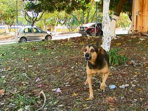 Cachorro rosna ao defender objetos do dono em Aguaí, SP (Foto: Reginaldo dos Santos / EPTV)