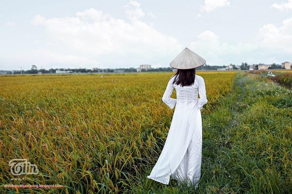 Ảnh con người: Áo dài dao chơi ngoài đồng lúa vàng 8