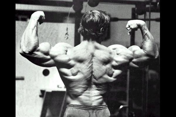 http://3.bp.blogspot.com/-x3r7keeB_JA/Tm66lXv5uBI/AAAAAAAABME/xohlUMP9wgc/s640/Arnold-Schwarzenegger-massive-back-muscles.jpg